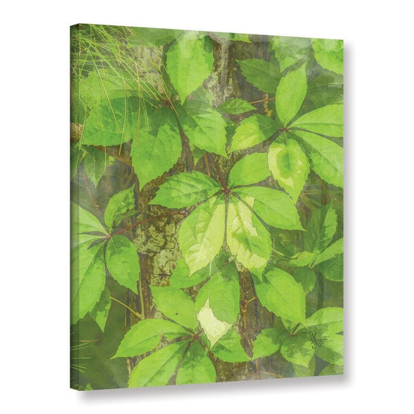 Scott Medwetz's 'Virginia Creeper' Gallery Wrapped Canvas