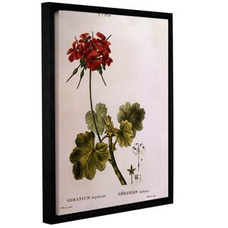 Pancrace Bessa 'Cranesbill, Geranium Inquinans' Gallery-wrapped Floater-framed Canvas