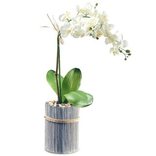 "20"" Garden Accents Potted Orchid"