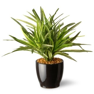 Clay Alder Home Waco Artificial 10.5-inch Dracaena Plant