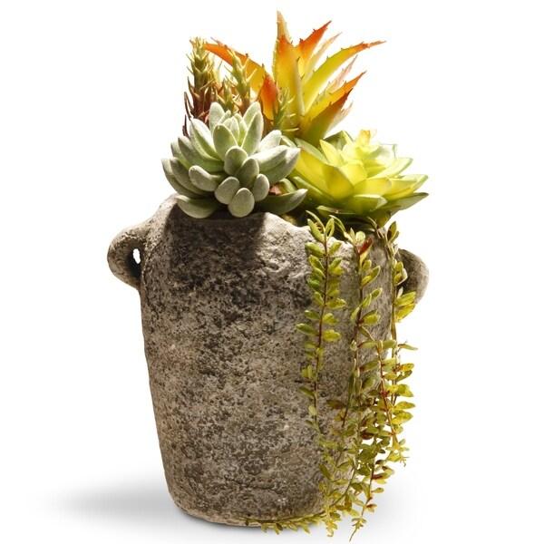 """11.8"""" Succulent Plants"""