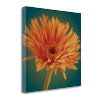 Chrysanthemum On Turquoise By Jane-Ann Butler,  Gallery Wrap Canvas - 22 x 22