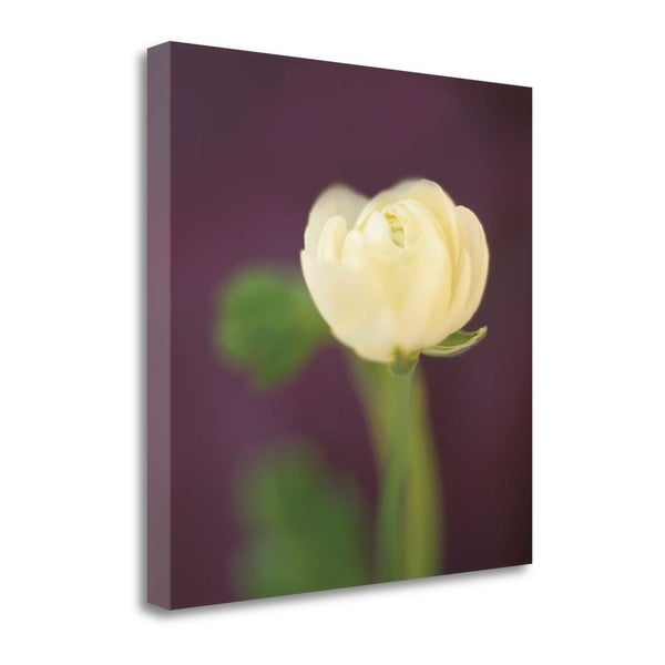 Ivory On Aubergine By Jane-Ann Butler, Gallery Wrap Canvas - 22 x 22