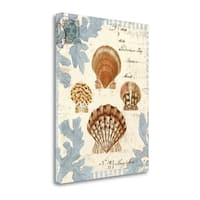 Seashell Collection I By Sabine Berg,  Gallery Wrap Canvas