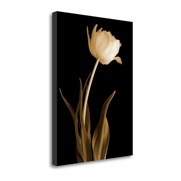 Classic Beauty By Charles Britt, Gallery Wrap Canvas
