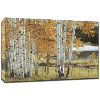 Birch Beauty By Mike Jones , Fine Art Print