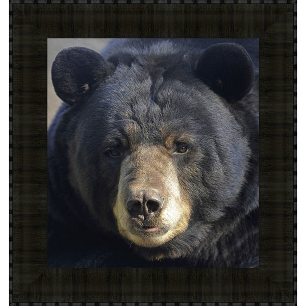 Gentle Stare Black Bear, Fine Art Print