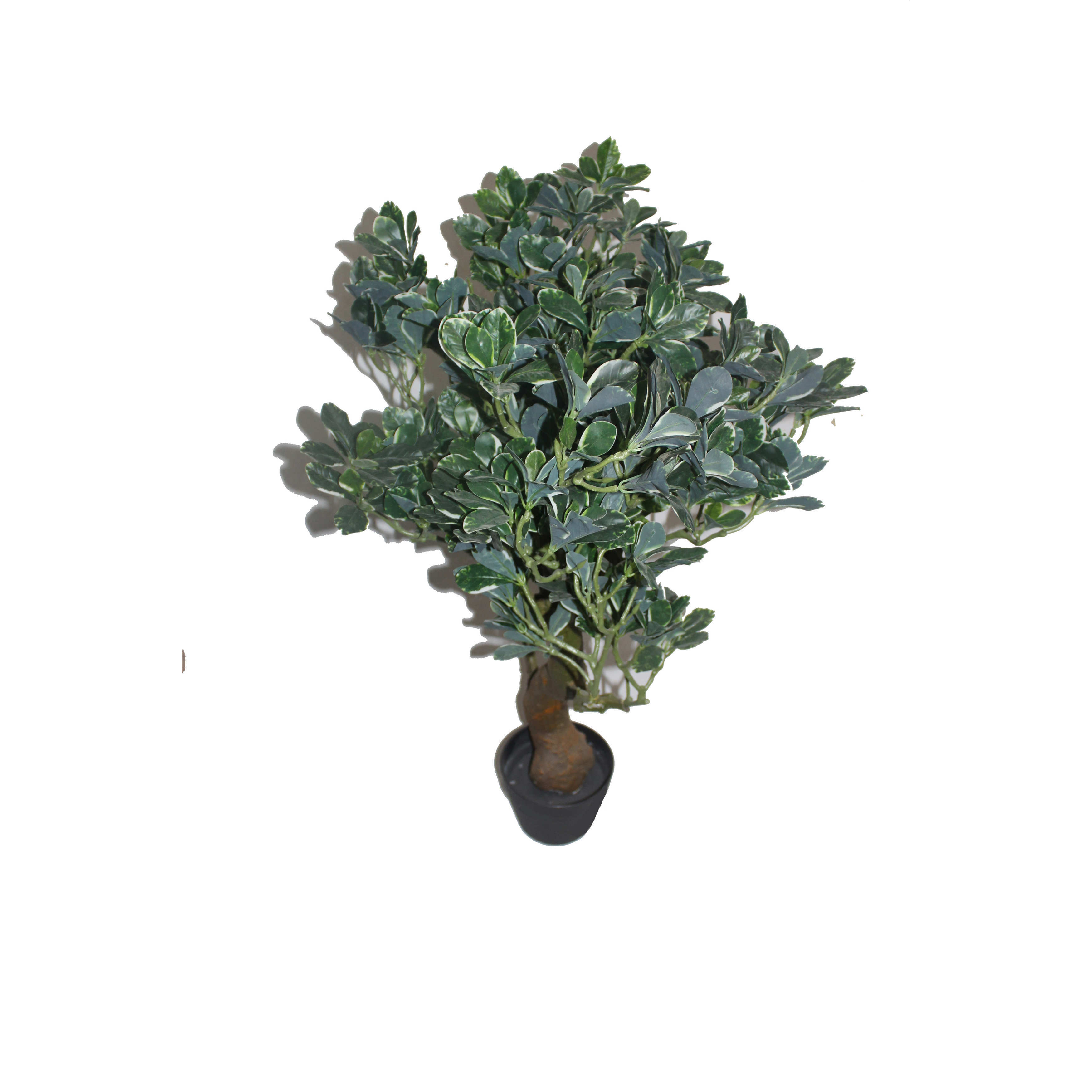 "Jeco 36"" Fortune Tree (potted tree)"