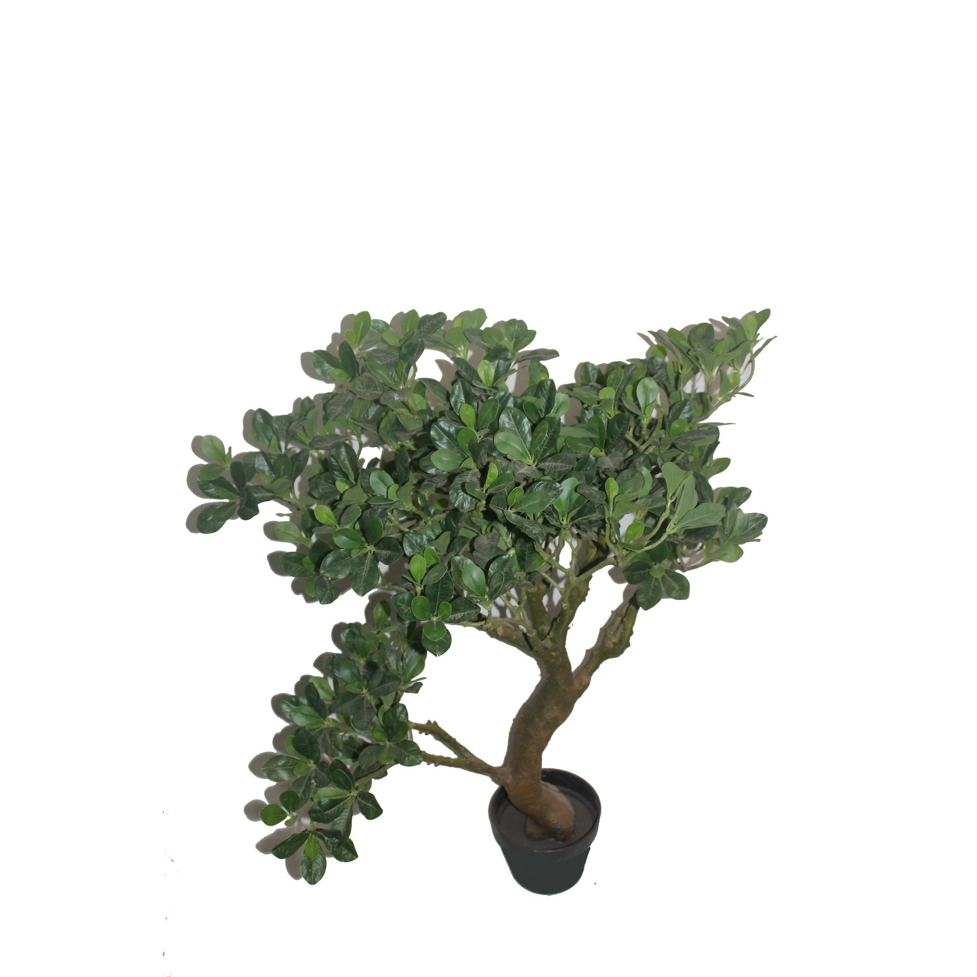 "Jeco 36"" White Fortune Tree (potted tree)"