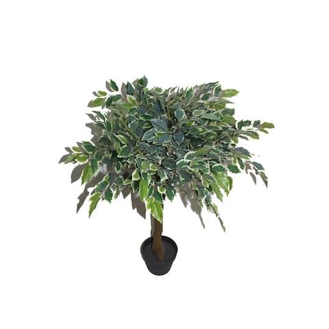 """36"""" White Banyan Tree"""