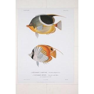 Chetodon A Housse premium Art Print of Fish Artwork by R.P. Lesson