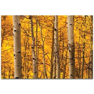 Aspen Gold - contemporary