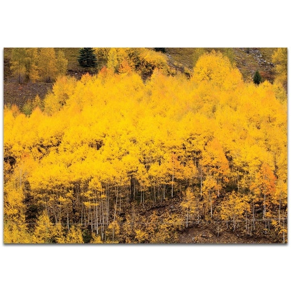 Aspen Autumn - contemporary