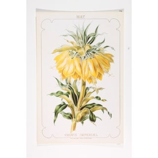 May Crown Imperial Poster Print by Paul Jerrard