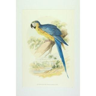 The Blue & Yellow Maccaw Wall Art Print by Edward Donovan