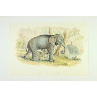 Elephant premium Art Print of Animals by Edward Donovan