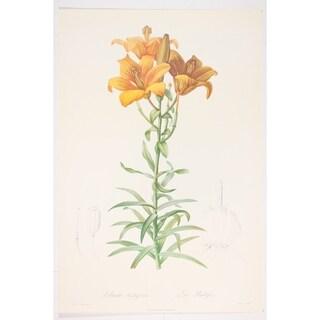 Lilium Bulbiferum Fine Art Print by P J Redoute