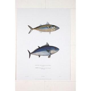 Maquereau Loo premium Art Print of Fish Artwork by R.P. Lesson