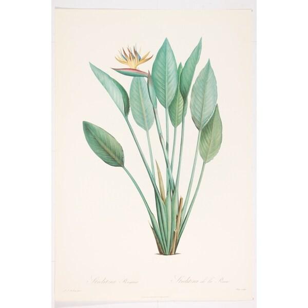Strelitzia Reginae Fine Art Print by P J Redoute