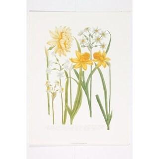 Daffodils III Wall Art Print by Johann Weinmann