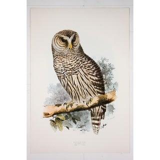 Barred Owl Premium Art Print by Edward Lear
