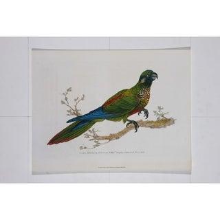 Parrot II Poster Print by Edward Donovan