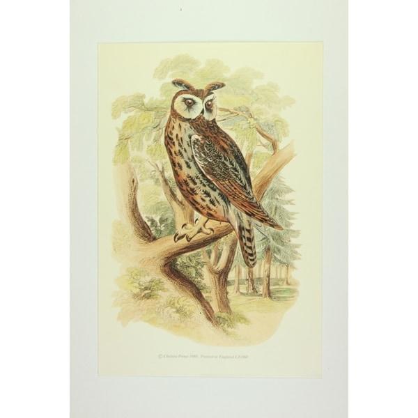 Owl Premium Art Print