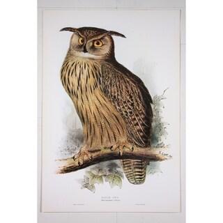 Eagle Owl Poster Print by Edward Lear