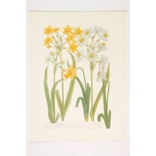 Daffodils I Premium Art Print by Johann Weinmann