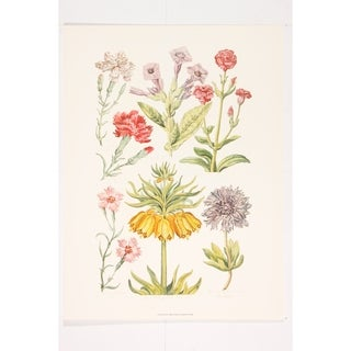 Botanical Flowers II Poster Print by John Hill