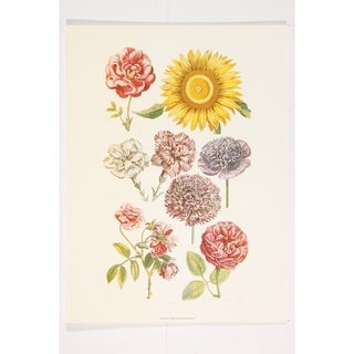 Botanical Flowers Fine Art Print by John Hill