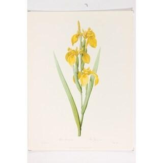 Yellow Iris Fine Art Print by P J Redoute