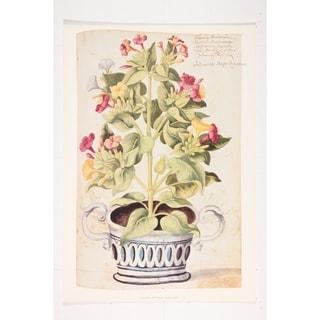 Botanical Wall Art Print by Johann Weinmann
