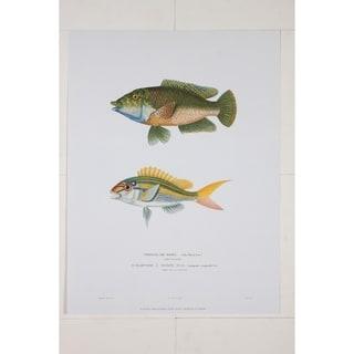 Girelle De Bory Wall Art Print by R.P. Lesson