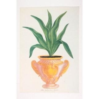 Aloe Tuberosa Levis Fine Art Print by Johann Weinmann