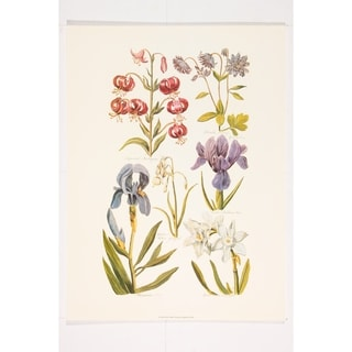 Botanical Wall Art Print by John Hill