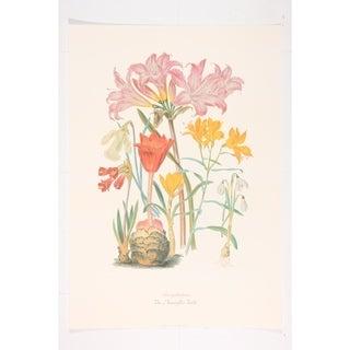 The Amaryllis Tribe Premium Art Print by Elizabeth Twining
