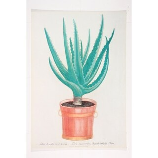 Aloe Socoterina Vera Wall Art Print by Johann Weinmann