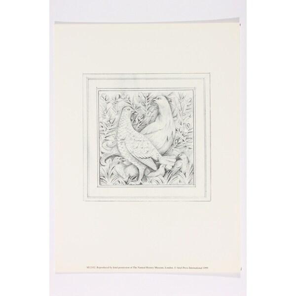 Pheasants Natural History Museum London Wall Art Print