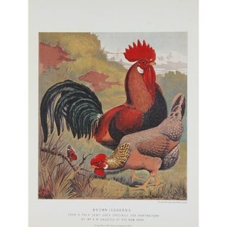 Brown Leghorns premium Art Print of Rooster Series by J W Ludlow