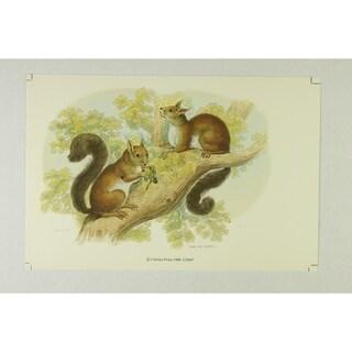 The Squirrel Premium Art Print