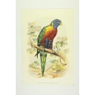 The Lorikeet premium Art Print of Animals by Edward Donovan