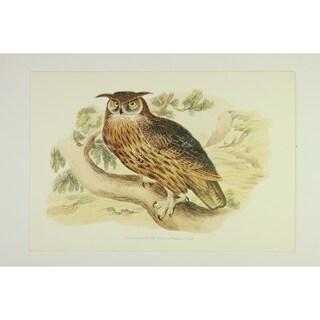 The Owl premium Art Print of Animals