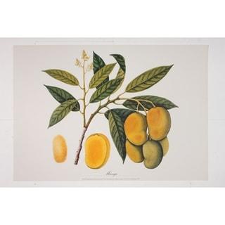 Mango II Fine Art Print