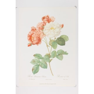 Decorative Roses Premium Art Print by P J Redoute