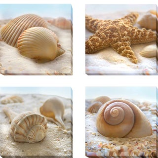 Beachy Shell I, II, III, and IV by Donna Geissler 4-piece Gallery-Wrapped Canvas Giclee Art Set