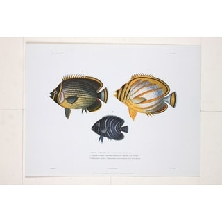 Chetodon Maille Wall Art Print by R.P. Lesson