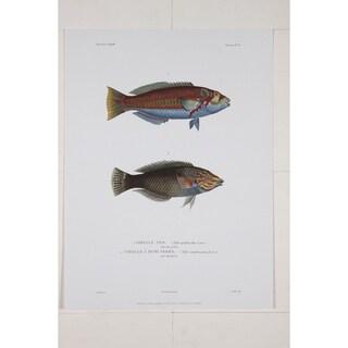 Girelle Pao Premium Art Print by R.P. Lesson