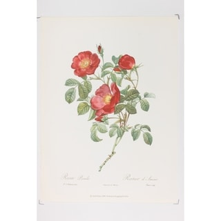 Decorative Roses Wall Art 3 of 4 Wall Art Print by P J Redoute