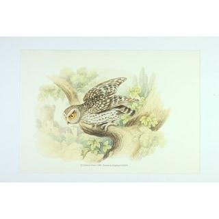 Owl premium Art Print of Animals by Edward Donovan